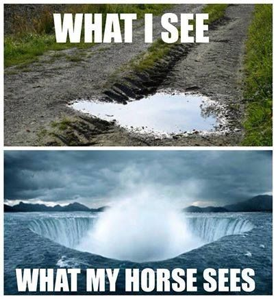Vasbyt farms: What I see and what my horse sees are not the same thing!