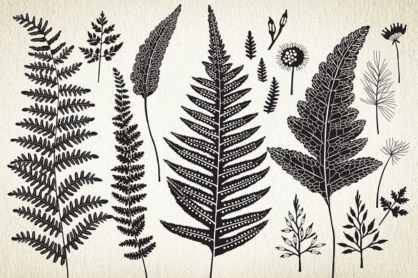 Botanical elements. More than 68! - Illustrations