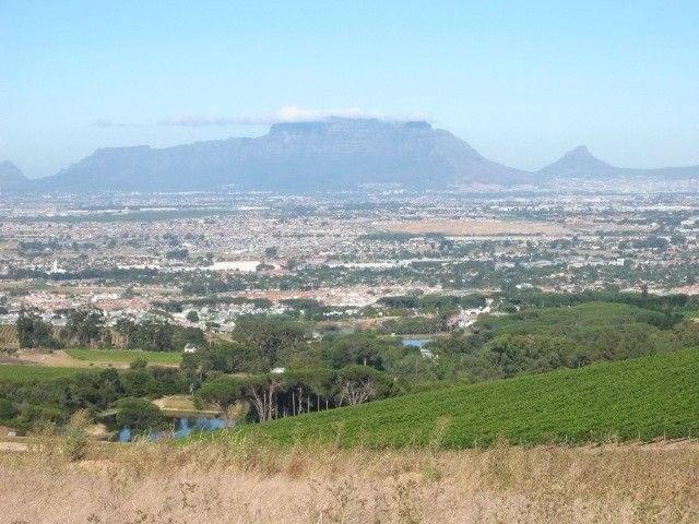 Table Mountain from Zewenwacht vineyards - Kuils River - Cape Town Northern Suburbs.