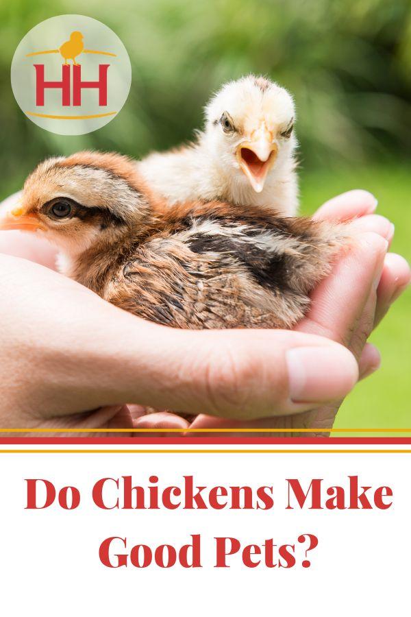 https://newsfromthecoop.hoovershatchery.com/do-chickens ...