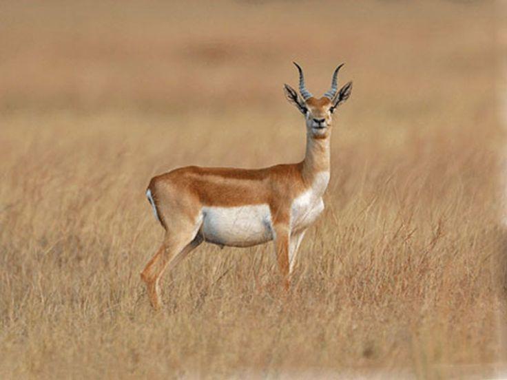 Gir National Park, Gir Wildlife Sanctuary, Gir Forest - in Gujarat, India