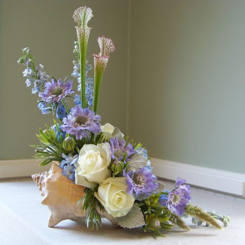 Conch shell arrangement with scabiosa, delphinium, hydrangea, dusty miller, pitcher plant, Leucadendron 'Pisa', bunny tail and Polar Star roses