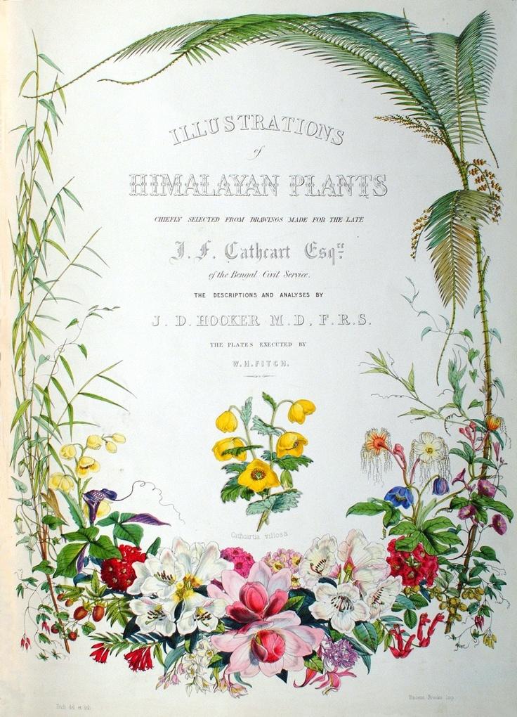 Botanical illustrations of Himalayan plants - Joseph Dalton Hooker