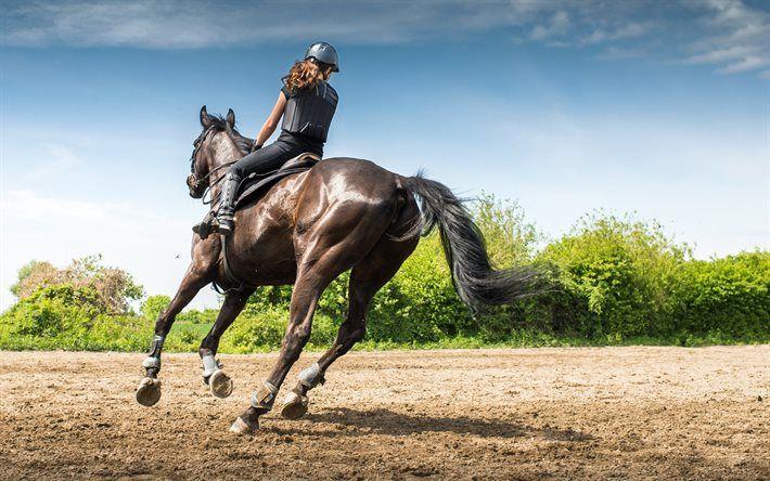 Lataa kuva Hevonen, Kilpailu, Equestrian, Käynnissä, Ratsastus, Equestrian Urheilu