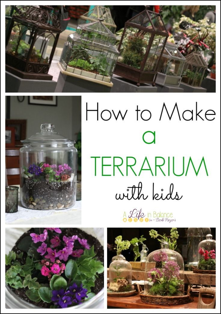 How to Make a Terrarium with Kids
