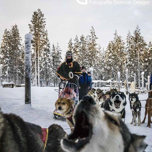 "Ready to rumble, ""Torassieppi cottages & safaris"", Finnland #finnland #lappland #winter #cuteanimals #sledgedog #dogsledding #scandinavian #polar #dogs #dogsofinstagram #schlittenhund #mushing #finland #iwishiwasinfinland"