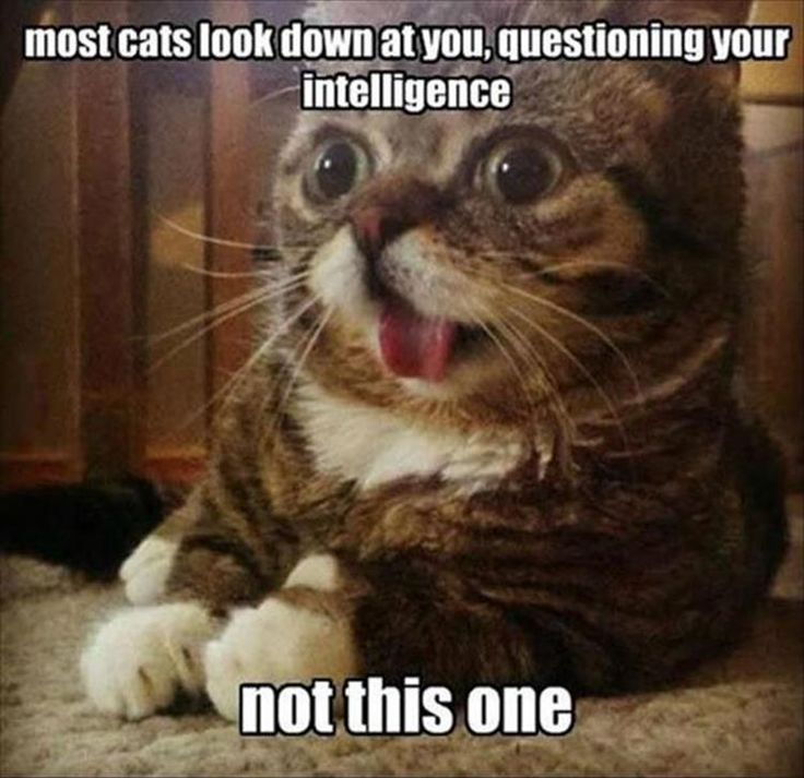 7ba08f31129d39497272d14ce6ee83e3 funny things funny stuff 8572 best cats cute, funny, beautiful cats images on pinterest,Get Down Cat Meme