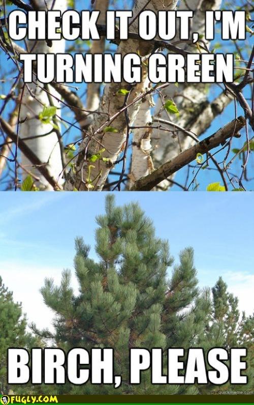 Haha trees...