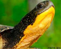 Tell the U.S. Fish and Wildlife Service to Protect Freshwater Turtles. http://www.thepetitionsite.com/takeaction/420/053/483/?cid=fb_Campaigns_CBDfwt# @SeaShepherd #defendconserveprotect
