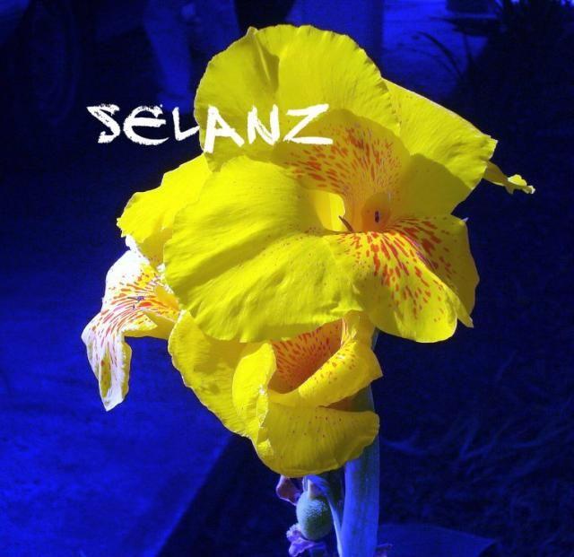 La Flor del Capacho