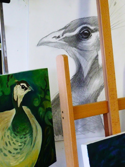 Best known for the peacock's flamboyant fantail, there's more to peafowl than meets the eyes - as Louise discovered while living and working in a zoo.... via Louise Scott - In Her Element  http://louisescottart.blogspot.co.uk/2013/04/for-love-of-peafowl.html  Louise Scott - In Her Element