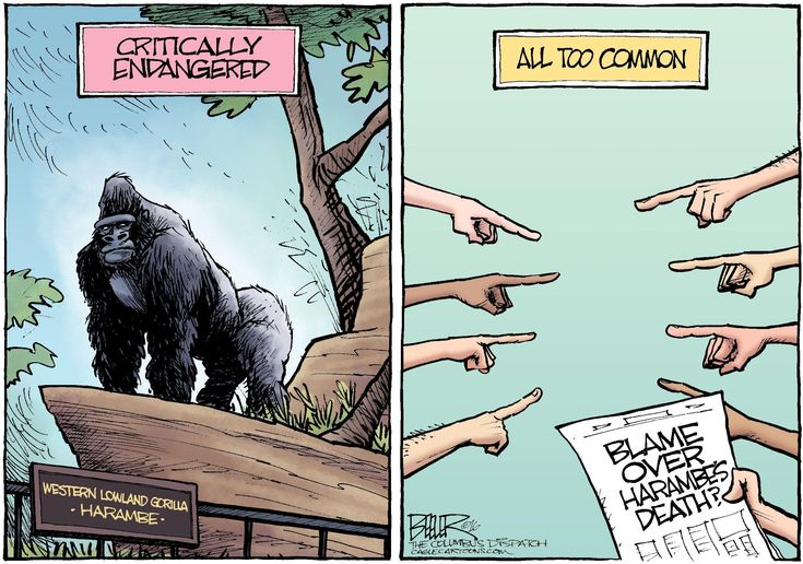 Nate Beeler cartoon on who is to blame for gorilla death.