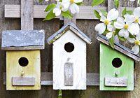 Nistkasten: Eigenheim für Vögel