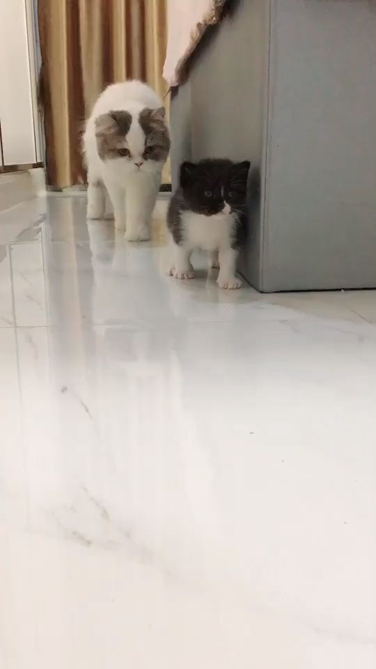 Cute Cat and Mom Love