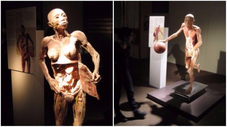 A exposição o Fantástico Corpo Humano dá um mergulho tri-dimensional para dentro dos sistemas do corpo humano — pele e ossos, dos pés à cabeça...