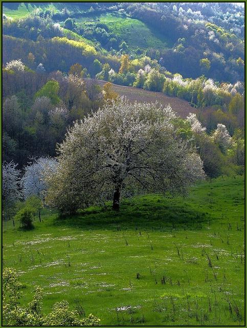 Piemonte - #Langhe