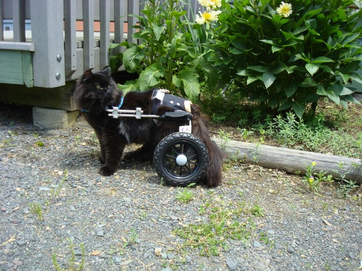 17 best images about animals in wheelchairs on pinterest coyotes