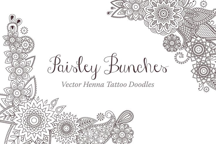 Paisley Bunches - Illustrations - 1