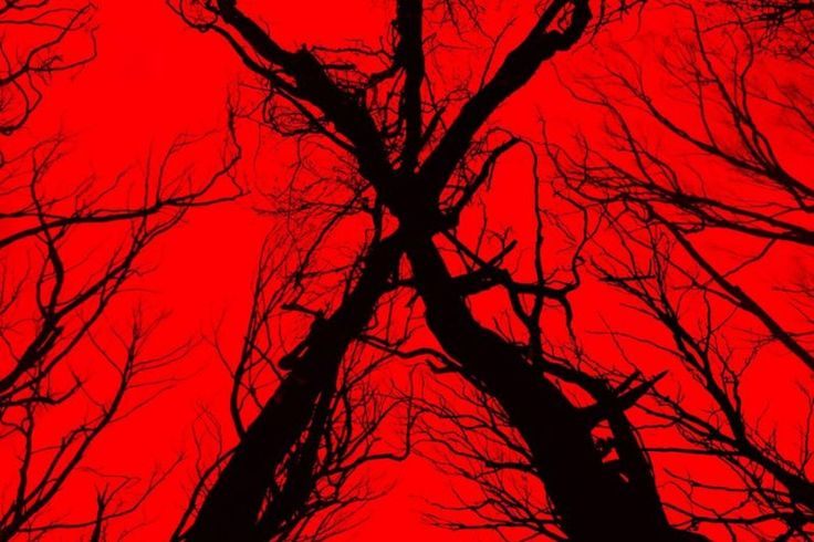 The Woods is really a stealth Blair Witch Project reboot    This is unexpected: The Woods, an upcoming found-footage horror film is going to be a direct sequel to the 1999 horror blockbusterThe Blair Witch Project. The revelation was unveiled during the film   http://www.theverge.com/2016/7/23/12262664/the-woods-stealth-blair-witch-project-reboot