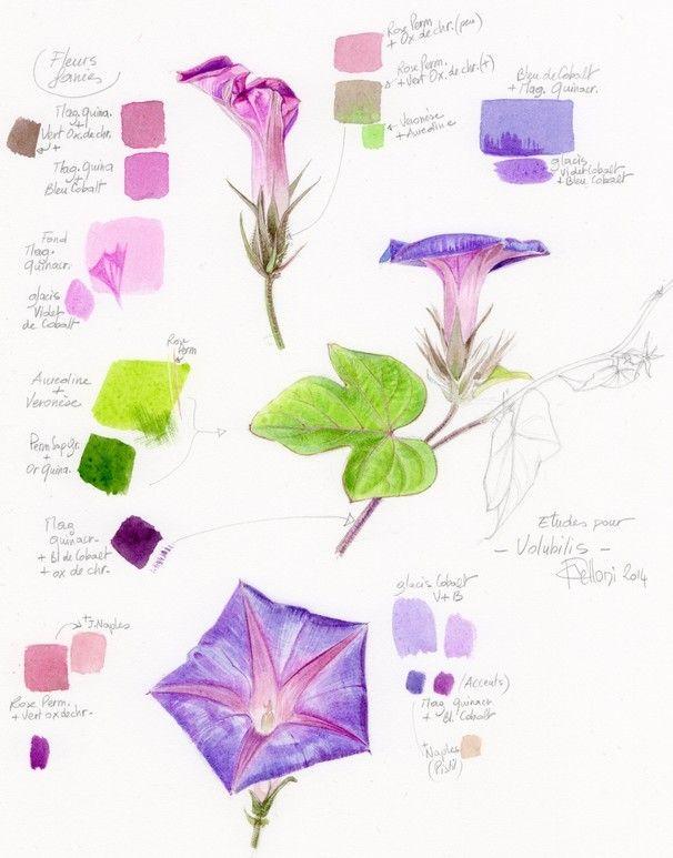 Voici ma planche d'études préliminaires. Le violet de Cobalt n'interviendra qu'en glacis sur un fond léger plutôt à la Quinacridone.