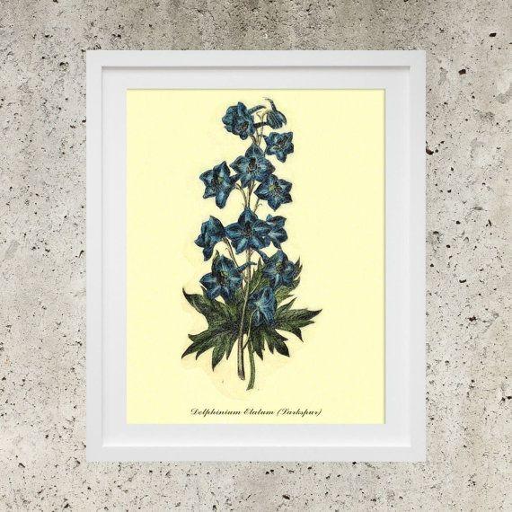 SALE Wall Art  Poster Download  Vintage Botanic by DigitalBanana Larkspur