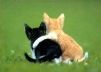 "Kittens - ""I'm glad you found someone to hug"""
