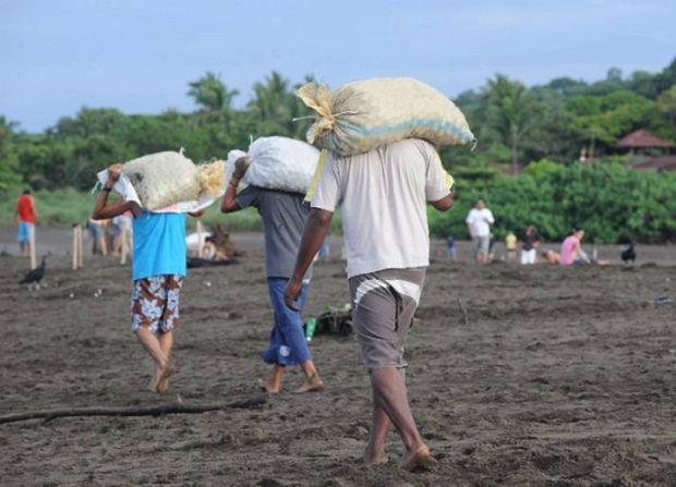 Kostaryka - jej mieszkańcy polują na chronione żółwie morskie (Gold Fields). http://tvnmeteo.tvn24.pl/foto/kostaryka-jej-mieszkancy-poluja-na-chronione-zolwie-morskie-gold-fields,27,26342,4.html