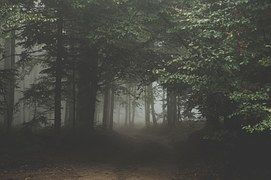Forest, Dark, Woods, Trail, Path