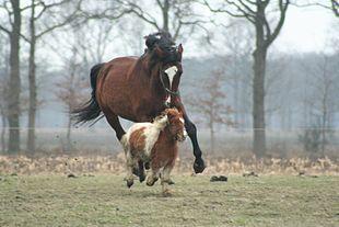 Horse & miniture horse.