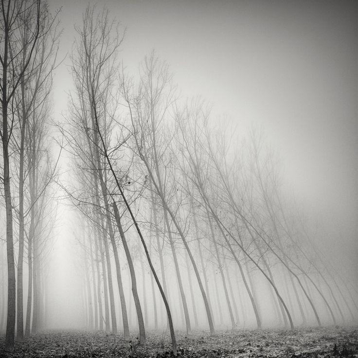 Hasselblad 503CW, digital back. Dans Nature, Végétal, Arbre, forêt. Tenderly Toghether, photographie de Pierre Pellegrini. Image #439190