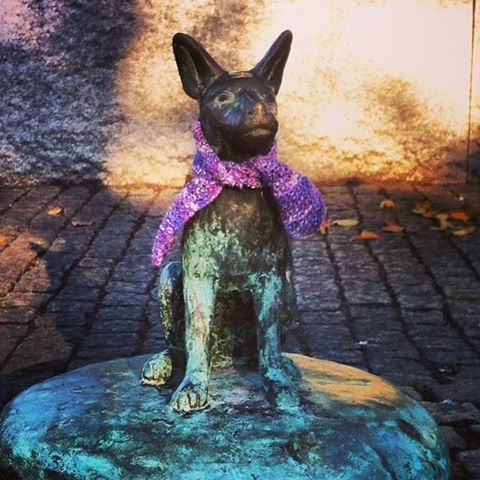 I thought it was getting cold so i knitted a little scarf for the doggie at Stigbergstorget :)