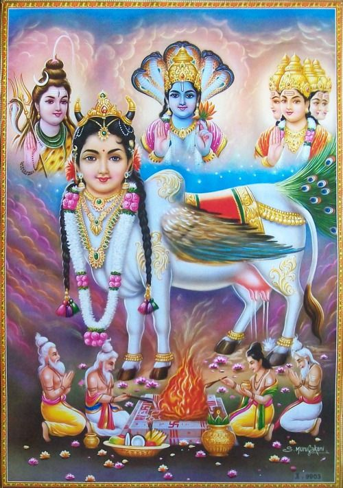 """Kamadhenu (Sanskrit: कामधेनु [kaːməˈd̪ʱeːnʊ] Kāmadhenu), also known as Surabhi (सुरभि Surabhī), is a divine bovine-goddess described in Hindu mythology as the mother of all cows. She is a miraculous """"cow of plenty"""" who provides her owner whatever he desires and is often portrayed as the mother of other cattle as well as the eleven Rudras. (via wikipedia)"""