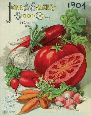 Vegetables, 1904 | Vintage Seed Packet ~ Catalog