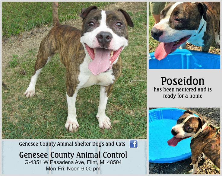 For more info follow the GCAS dogs and cats facebook page. https://www.facebook.com/pages/Genesee-County-Animal-Shelter-Dogs-and-Cats/198634230205183?hc_location=timeline