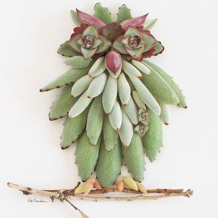 These succulents are a hoot.  @sistergoldenshop  #thesucculentsource #succulents #succulent