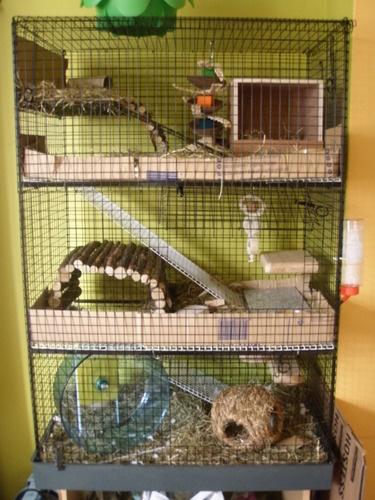 3 tier Ferret/Rat/Degu cage by Doghealth £60.00