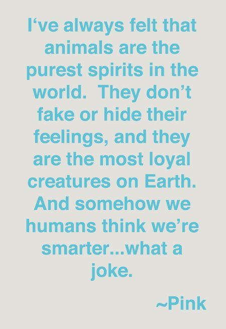 I've always felt that animals are the purest spirits in the world. They don't take or hide their feelings, and they are the most loyal creatures on earth. And somehow we humans think we're smarter...what a joke!