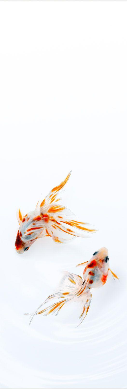 Small Calico by Osamu Yamazaki, Japan