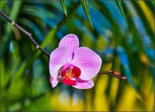 Rosa e orquídea, dois gêneros de beleza!!!  :)