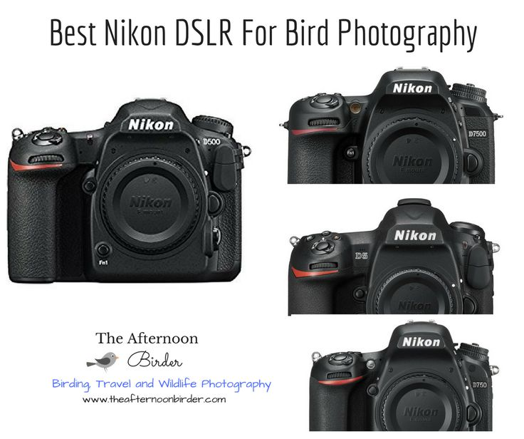 Want to buy the best Nikon DSLR for bird photography? Look no further! D500, D7500, D750, D810, D5, D7200 comparisons and recommendations.