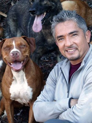 Cesar Millan uses liver bites as a healthy treat AND…