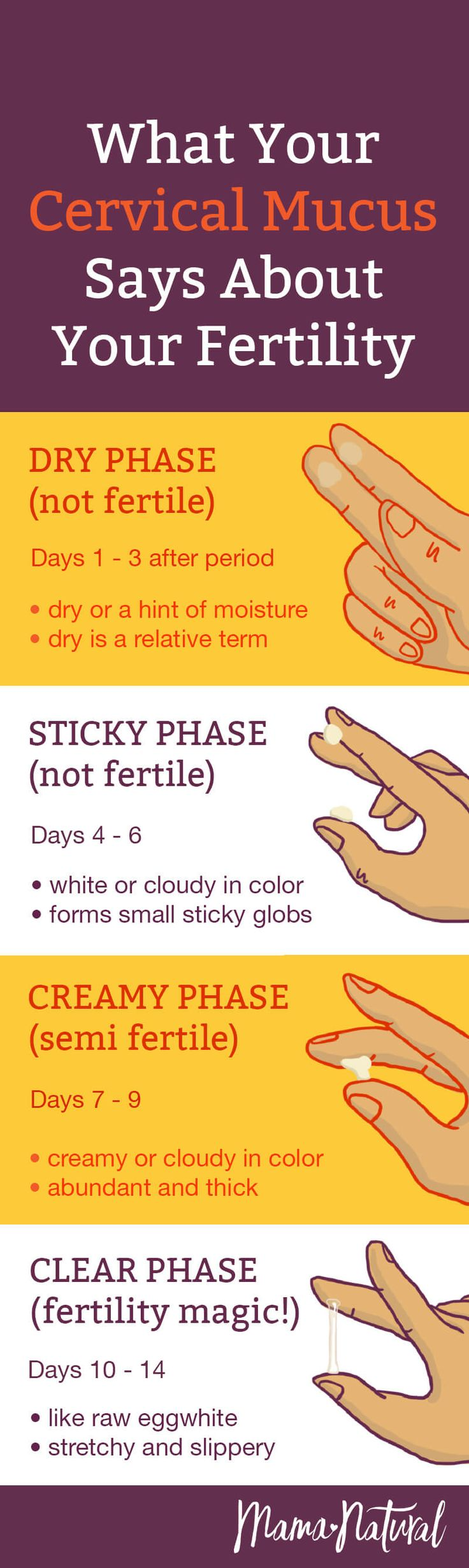 What does your cervical mucus say about your fertility? A lot, actually! See our cervical mucus chart to know exactly when to try and get pregnant (or not). https://www.mamanatural.com/cervical-mucus/