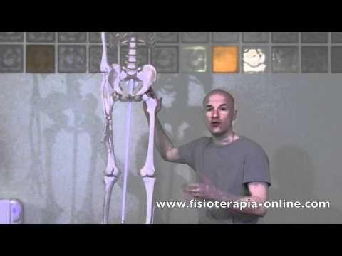 Condromalacia rotuliana Izq - Visión desde la fisioterapia y la medicina natural.