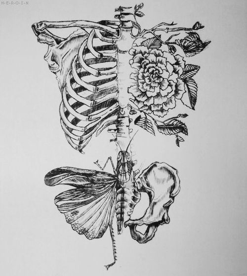 skeleton rib cage drawing - Google Search