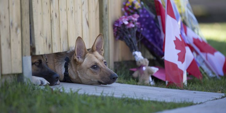Dogs Grieve The Loss Of Soldier Shot In Canada
