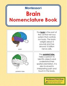 """Brain Nomenclature Book can be used in book or card format. It illustrates and describes 11 parts of a human brain: brain, frontal lobe, temporal lobe, parietal lobe, occipital lobe, cerebrum, cerebellum, pons, medulla, spinal cored, and brain stem.    book cover    11 picture cards    11 description cardsPages are approx. 3 x 5"""".Learn how to use Montessori Nomenclature by following our tutorial.Learn how to bind this book."""