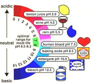 acid and bases - Google Search | Chemistry | Pinterest ...
