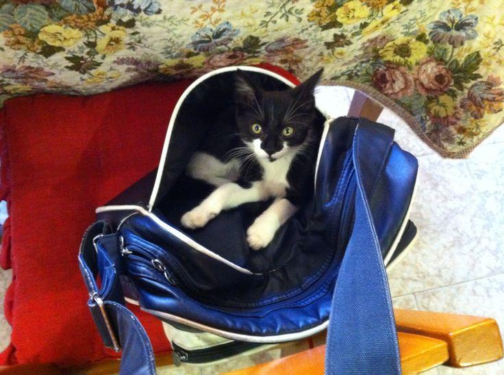 """Credo che la mia micina abbia frainteso il senso della frase """"  indossare la borsa"""""""