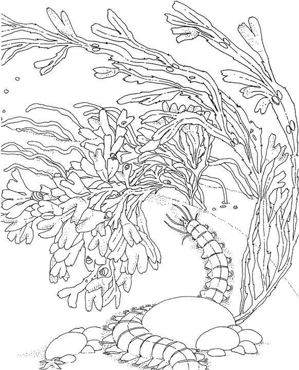 7 best Coral reef coloring pages images on Pinterest  Coloring