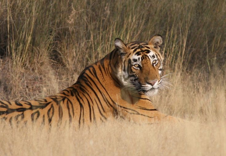 The Wild Life Destination Situated in the Sawai Madhopur district of Rajasthan, Ranthambore is one of India's most popular wildlife destinations. Best known as a Project Tiger reserve location, Ranthambore is also one of the most successfully maintained tiger reserves in India attracting numerous visitors from all ove